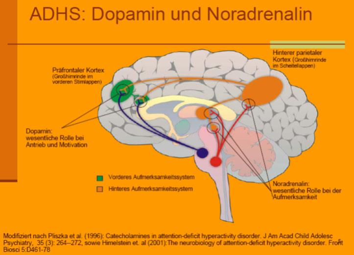 noradrenalin og dopamin